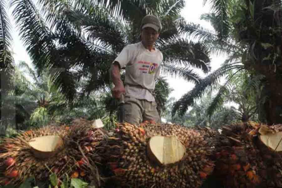 Pembinaan Petani Sawit Swadaya Tanggungjawab Semua Pihak