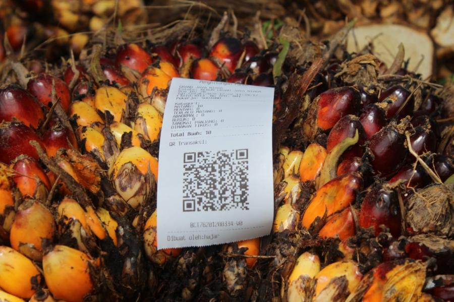 Transformasi Digital Perkebunan Kelapa Sawit Di Masa Pandemi